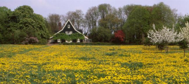 landgoed olmenhorst
